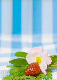 Free Strawberry And Flower On Fabric Background Stock Photos - 5605623