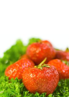 Free Close-up Strawberry On Leafs Stock Image - 5605691