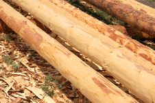 Free Timber Stock Photography - 5605942