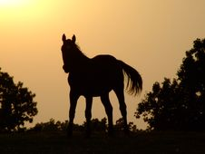 Free Horse Sunset Silhouette Royalty Free Stock Image - 5606636