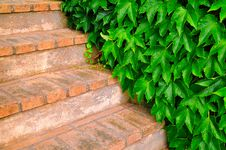 Free Hedge And Stairs Royalty Free Stock Photography - 5606977