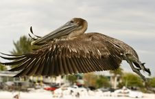 Free Pelican - Full Fly Stock Photography - 5607902