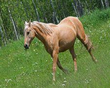 Free Cream Colored Horse In Field Stock Photo - 5608700