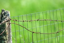 Free Barbed Wire Fence By Green Field Stock Image - 5608811