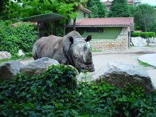 Free Rhinoceros 1 Stock Image - 5609841