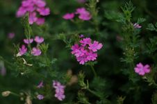 Free Small Flower In The Forest Royalty Free Stock Photos - 56050058