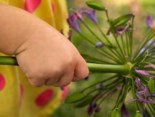 Free Lovely Infant Baby Hand Holding A Flower Royalty Free Stock Image - 56092196