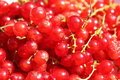 Free Red Currant Close-up Stock Photography - 5611742