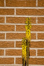 Free Wall Flowers Royalty Free Stock Photos - 5617688
