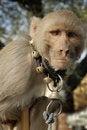 Free Captive Monkey Stock Photos - 5618963