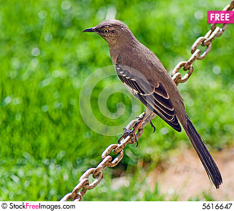Free Birdie Sitting On A Chain Royalty Free Stock Photography - 5616647