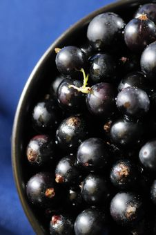 Free Black Currants. Stock Photography - 5610142