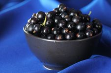 Free Black Currants. Royalty Free Stock Photo - 5610185