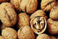 Free Walnuts Royalty Free Stock Photography - 5610477