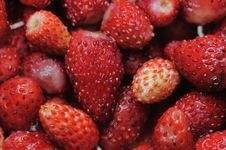 Free Wild Strawberries. Stock Photography - 5610662