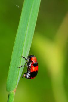 Free Bug On The Plant Stock Photography - 5610672