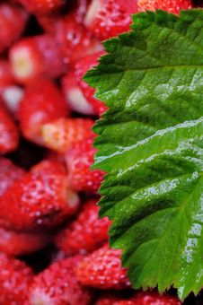 Free Wild Strawberries. Stock Photos - 5610793