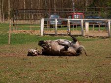 Free Cheerful Horse Royalty Free Stock Photos - 5610938