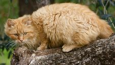 Free Cat Royalty Free Stock Photo - 5611185