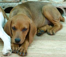 Free Baby Dog Stock Photo - 5611300