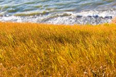 Free Steppe And Sea Stock Photos - 5611333