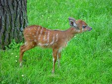 Free Baby Deer-goat Royalty Free Stock Photo - 5611825