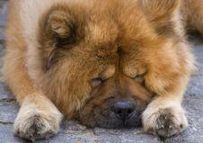 Free Sleep On The Road Royalty Free Stock Photo - 5612185