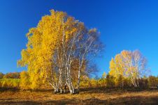 Free Golden Autumn Stock Photos - 5612293
