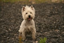 Free Dog Stock Photos - 5612743