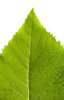 Free Macro Leaf Stock Image - 5615151