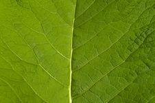 Free Macro Leaf Royalty Free Stock Photos - 5615228