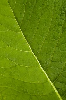 Free Macro Leaf Stock Photo - 5615350