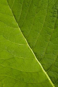Free Macro Leaf Stock Photo - 5615350