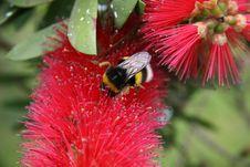 Free Pollination Stock Image - 5615431