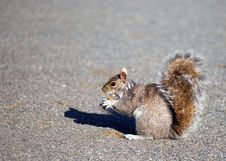 Free Squirrel And Cake Stock Photography - 5616602