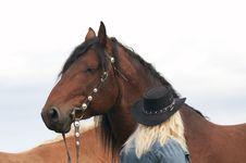 Free Horse Portrait Stock Image - 5616711