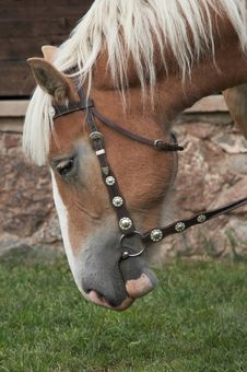 Free Horse Portrait Stock Photography - 5616742