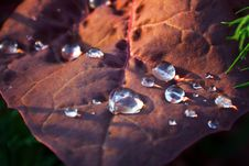Free Drops On A Leaf Stock Photography - 5617182