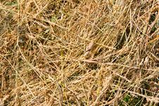 Free Hay Background Stock Photos - 5617203