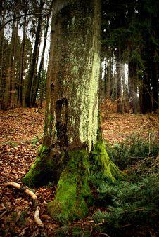 Free Tree Stock Photo - 5617530