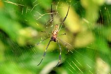 Spider In The Forest Royalty Free Stock Images