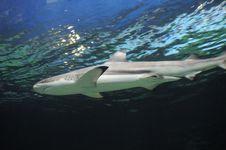 Free Shark Underwater Stock Photo - 5617600