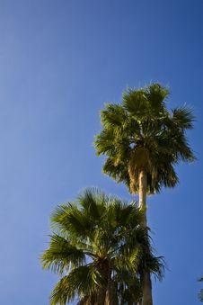 Free Palms Royalty Free Stock Image - 5617656