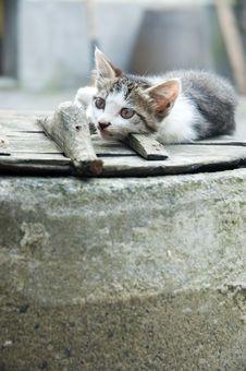 Free House Cat Stock Photo - 5618050