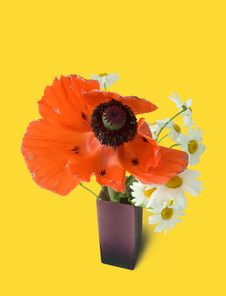 Free Red Poppy And Camomiles Royalty Free Stock Images - 5618689