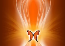 Free Abstract Butterfly Stock Image - 5619161