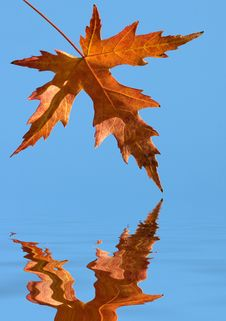 Free Yellow Autumn Leaf Royalty Free Stock Images - 5619499