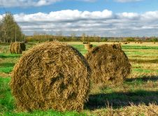 Free Intorted Rolls Of Hay On The Autumn Field Royalty Free Stock Photography - 5620947