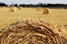 Free Hay Is Combined On A Floor Royalty Free Stock Photography - 5621407