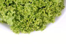 Free Fresh Green Lettuce Stock Images - 5621984